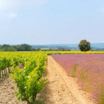 Abonnement vin Parcours Initiatique: La Provence